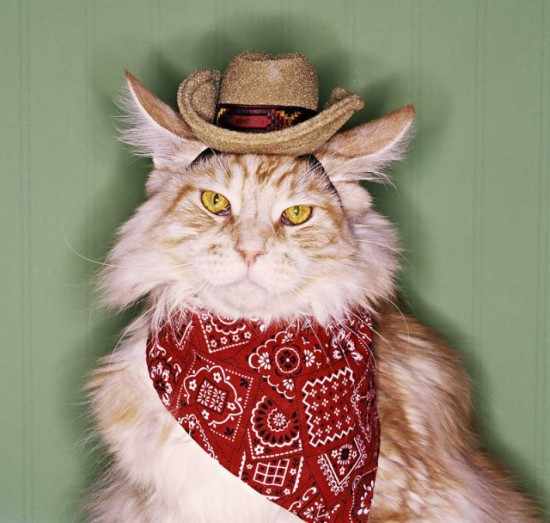 "When I hear the name ""Nashville Pussy,"" this is what I think of. Also, there's a benefit for Cat Town tonight."